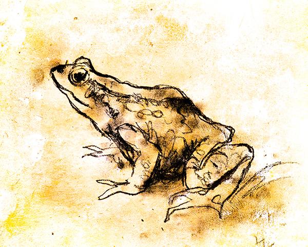 Frog. Mixed media.