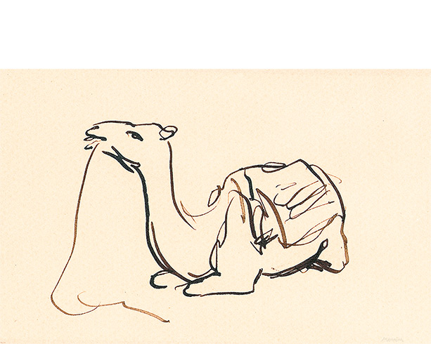 Camel. Pen and Ink drawing.