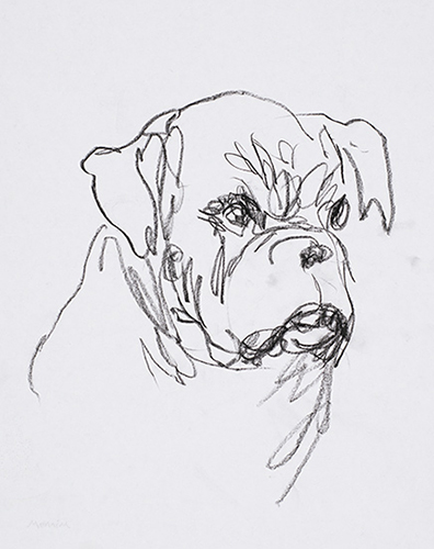 Dogs head. Preparatory sketch. Pencil
