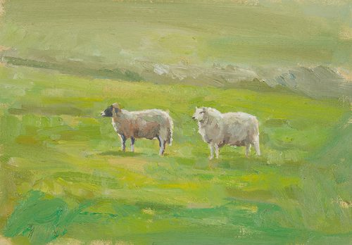 Herdwick desert! Oil 11 x 17 inches